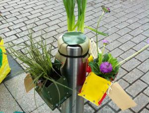 végétalisation de la ville