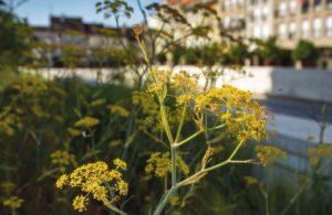 biodiversité végétale en ville